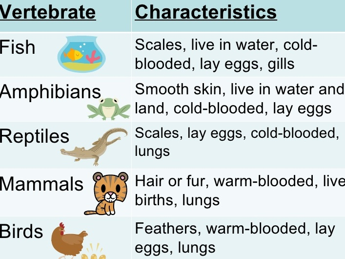Characteristics of vertebrates and invertebrates pdf