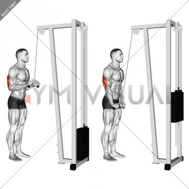 cable pushdown with v bar exercise instructions