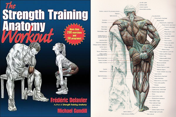 Frederic delavier strength training anatomy free pdf