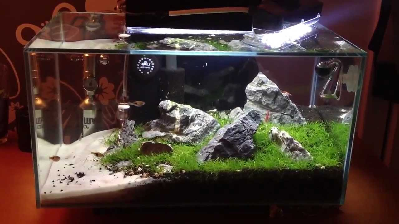 fluval edge 6 gallon manual